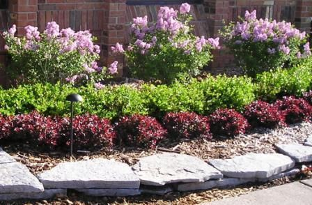 Nice layers and pretty color scheme. ll Low Maintenance Front Yard Landscaping | low maintenance shrubs for backyard 1 Low Maintenance Shrubs for ...