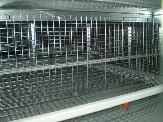 Installation and Service for all types of battery cage systems throughout India.  For more details: http://www.agribazaar.co/index.php?page=item&id=1968