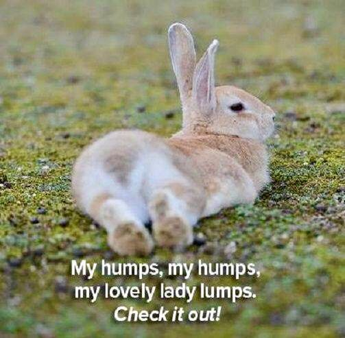 187 best Animals images on Pinterest Baby bunnies, Bunnies and - resume rabbit cost