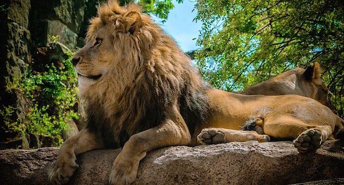 Zoo Dresden Gutschein 2 Fur 1 Coupon Code Ticket Mit Rabatt Zoo Frankfurt Zoo Zoologischer Garten