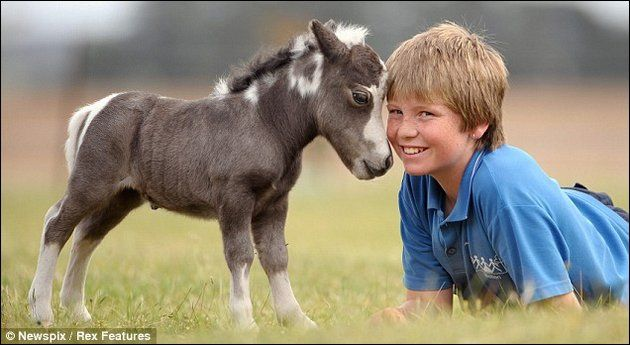 Miniature horses often live longer than the full-sized ones, according to this site.