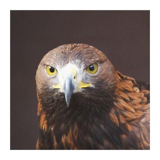 Eagle 001 canvas prints