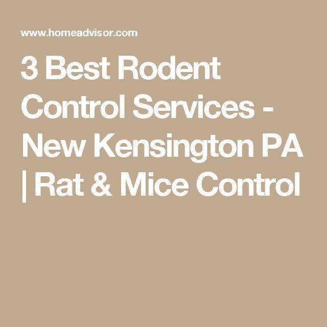 3 Best Rodent Control Services  New Kensington PA | Rat & Mice Control