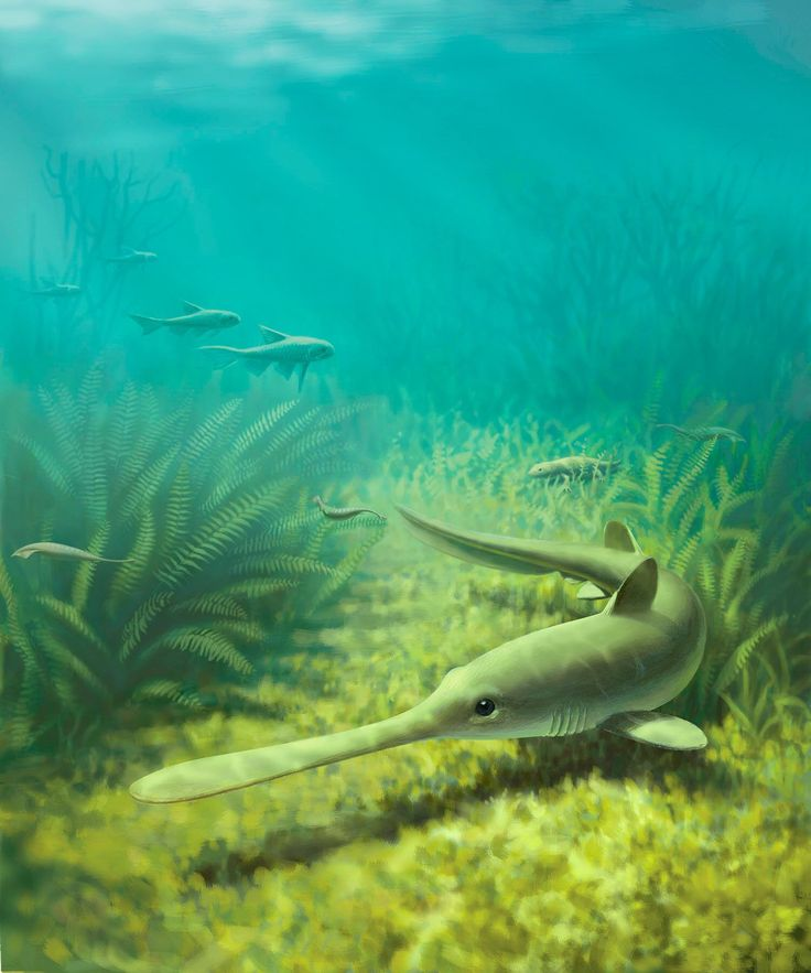 Ausgestorbene Haie