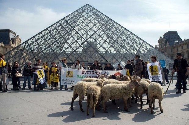 Schapen bestormen het Louvre (video) | Zita.be
