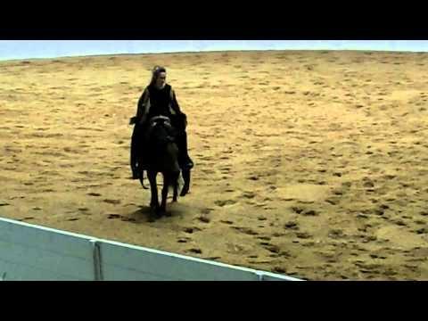 Stacy Westfall 2011 Quarter Horse Congress Freestyle Open Reining Winning Run!!!!