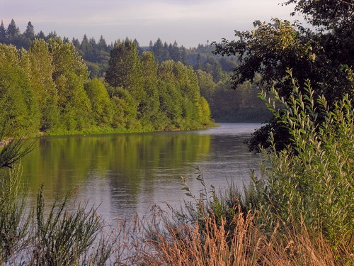 Cowlitz River near Castle Rock, Washington. I used to live in Castle Rock right by the Cowlitz river and 'the Rock' when I was a child. I have good memories of exploring 'the Rock.'