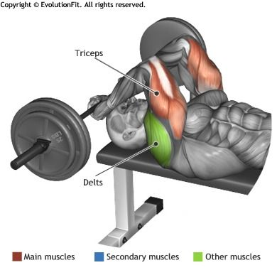 TRICEPS -  LYING BARBELL FRENCH PRESS