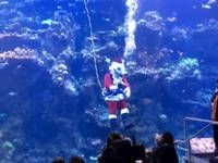 $40M Lottery Ticket; Diving Santa; Turtle Rescue: Saturday Smiles