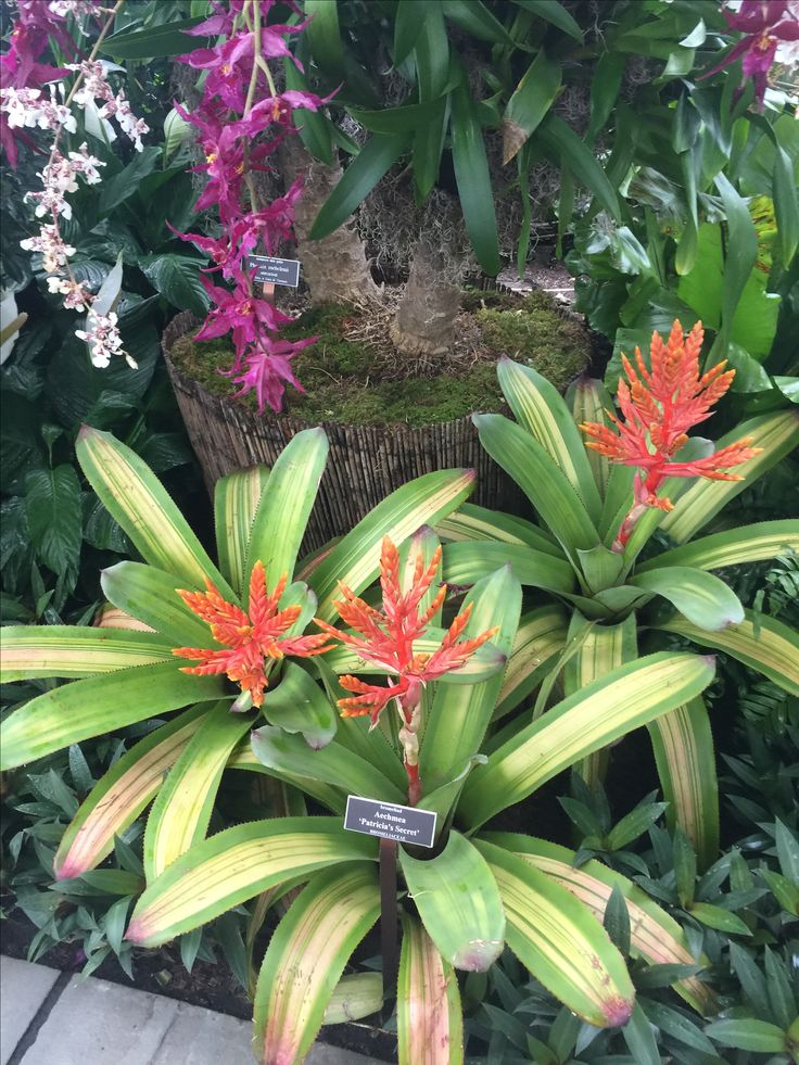 The 25 Best Orchid Show Ideas On Pinterest Orchid Show