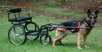 How to Teach a Dog to Pull a Cart. Love this cart