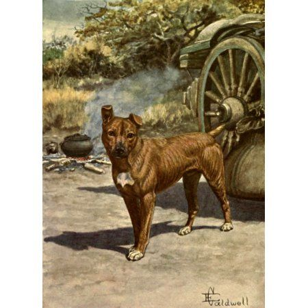 Jock of the Bushveld 1913 Jock Canvas Art - Edmund Caldwell (18 x 24)