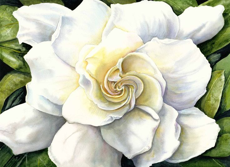 soft looking Gardenia
