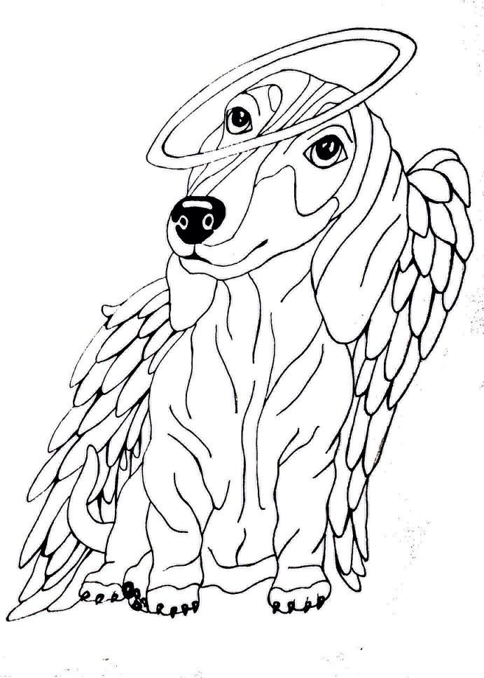 Long Haired Dachshund Pages Coloring Sketch Coloring Page