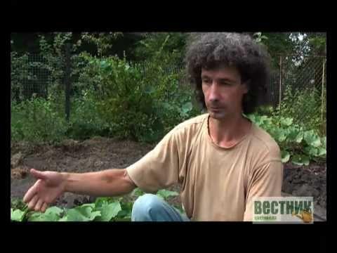 Сажаем огурцы. Обсуждение на LiveInternet - Российский Сервис Онлайн-Дневников