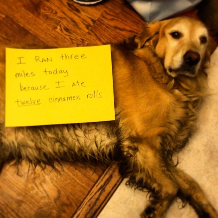 17 Best Images About Lets Shame The Fuck Out Of Some Dogs