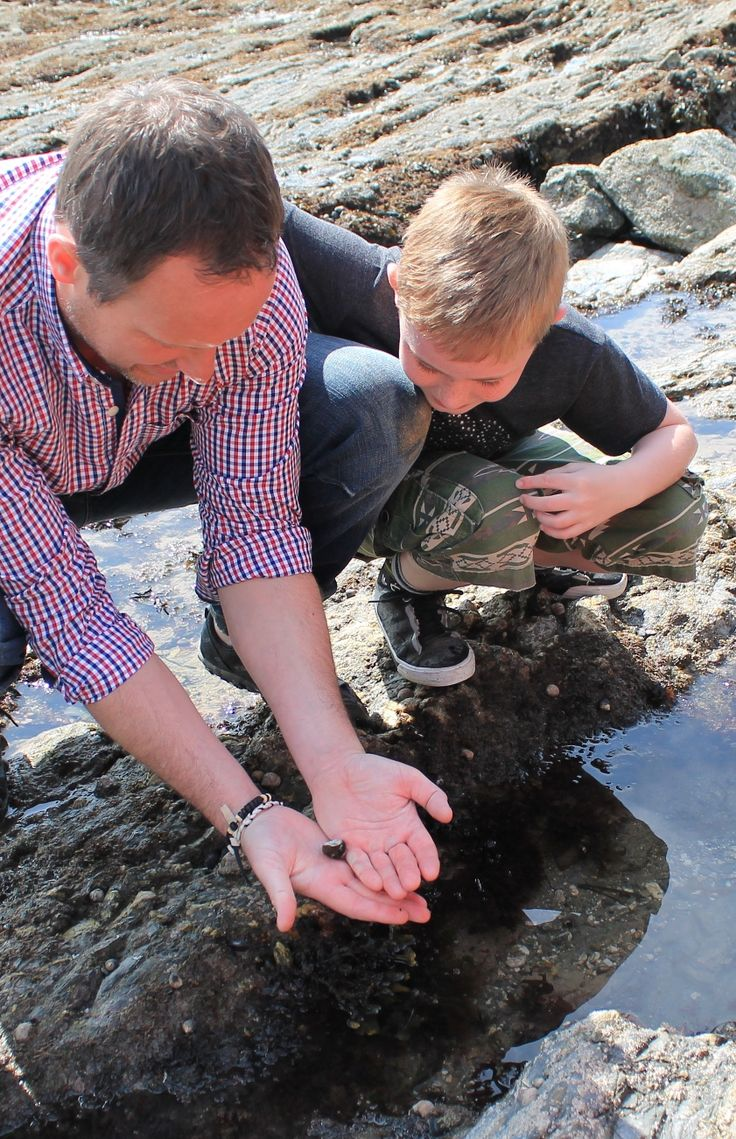 Check out the crazy creatures in a rock pool at Glendurgan - one of our '50 things to do before you're 11¾'