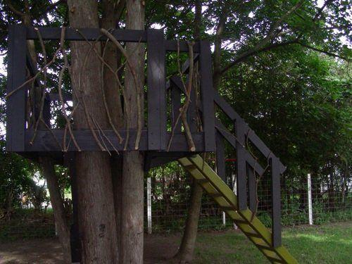 A Tree House Picnic