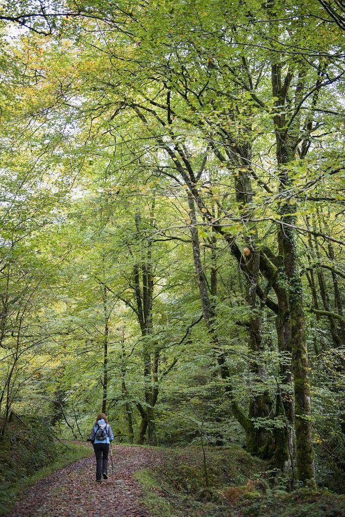 En otoño no pierdas la oportunidad de perderte en un bosque asturiano. Bosque de Cea by José Ramón García