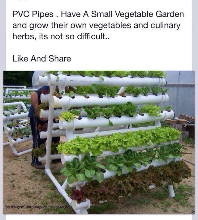 PVC Pipe Vegetable Garden!!!