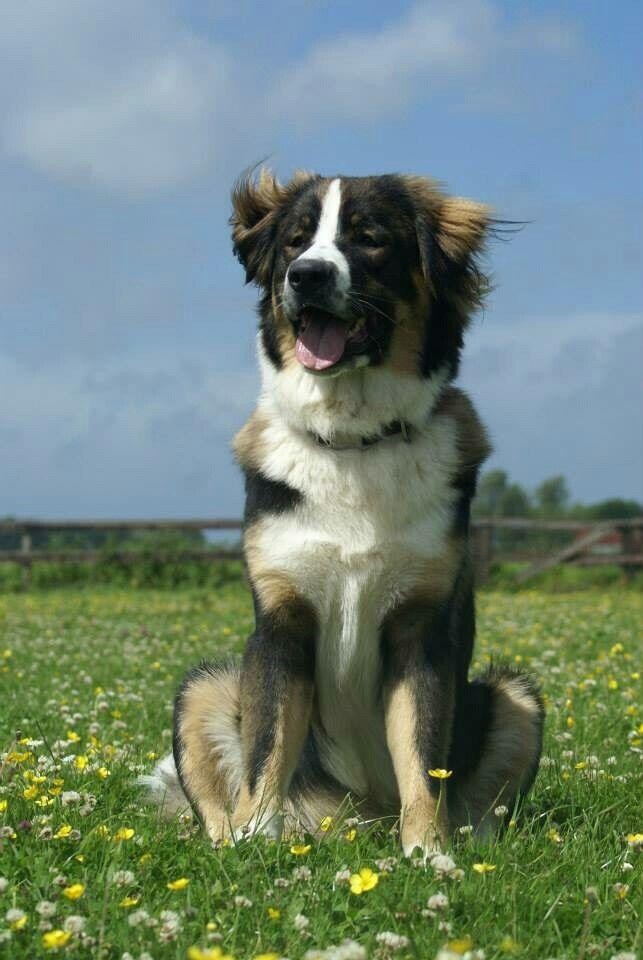 Koningbinc #dog #dogs #animal #fun #koningbinc #dogmodel #animal #lovemydog