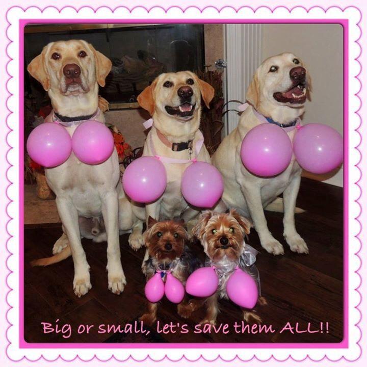 cute breast cancer awareness - photo #8