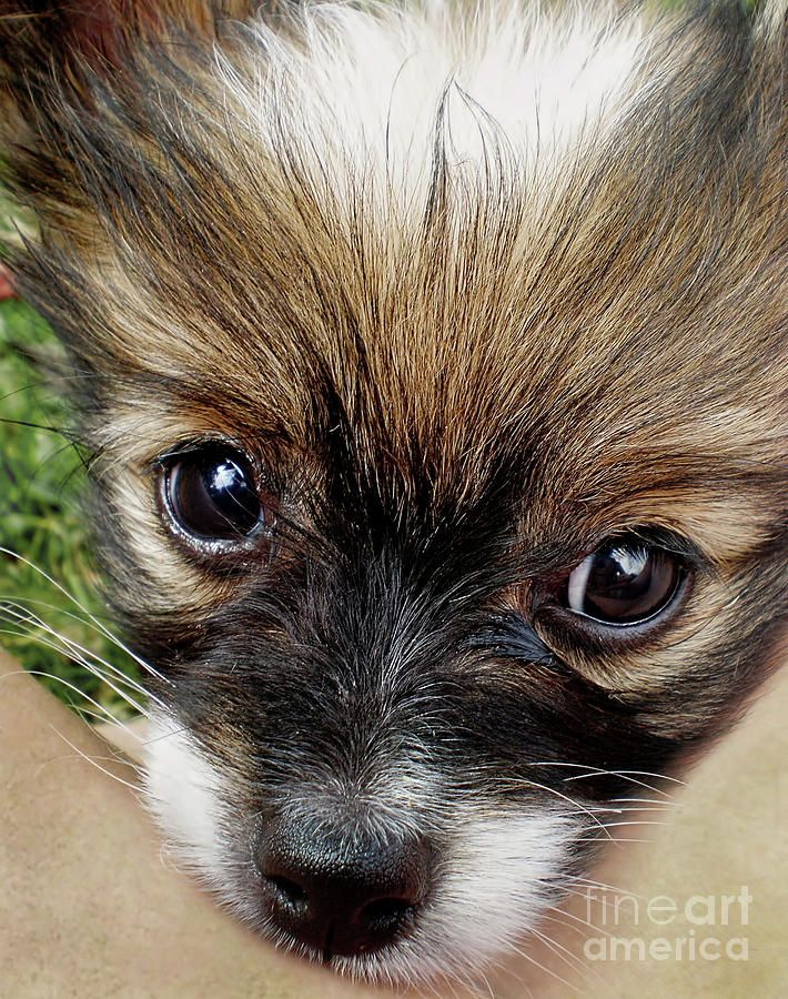 #Puppy #Love by #Kaye_Menner #Photography Quality Prints Cards Products at: http://kaye-menner.pixels.com/featured/puppy-love-by-kaye-menner-kaye-menner.html