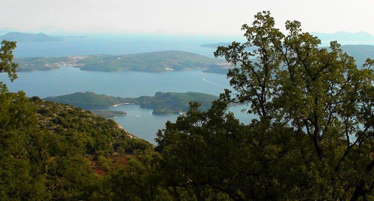 Βελανιδιές στον λόφο των Σκάρων - Oaks at Skaroi hill