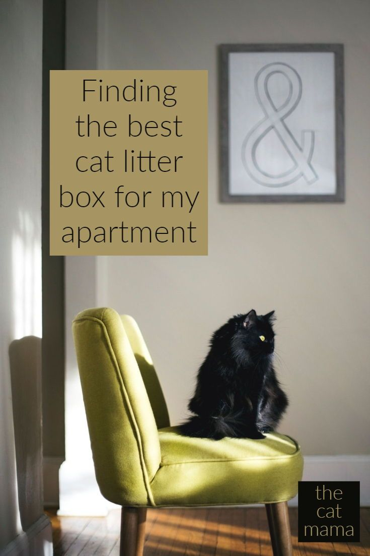 The 3 Best Cat Litter Box for Small Apartment | Cat Mama | Best cat ...