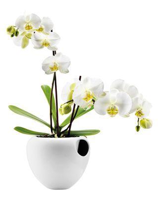 Pot de fleurs pour orchidée - Avec réserve d'eau Blanc - Eva Solo