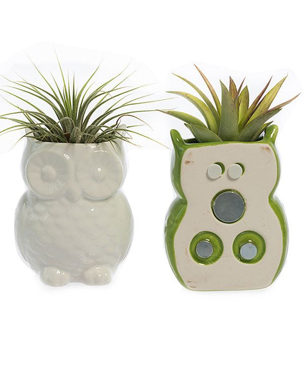 Look at this White & Green Magnetic Owl Wall Planter with Air Plants Set on #zulily today!