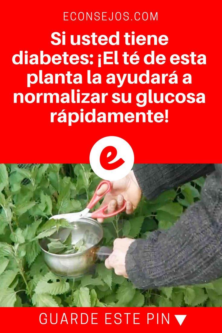 Ortiga propiedades | Si usted tiene diabetes: ¡El té de esta planta la ayudará a normalizar su glucosa rápidamente! | Esta infusión es recomendado para las personas con diabetes, problemas renales y de circulación de sangre. Un milagro más que nos brinda la naturaleza.