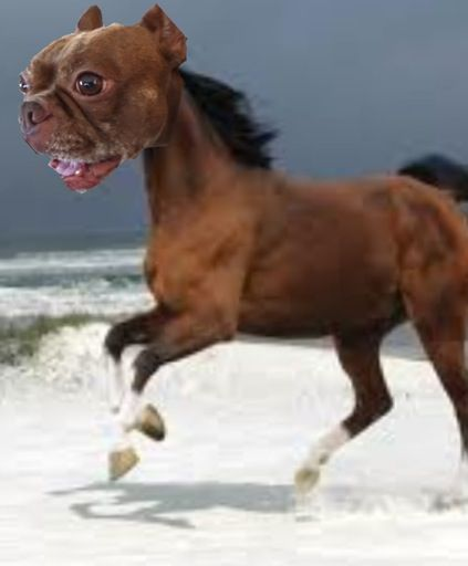 Dog-horse This is a mix between a French bulldog and a
