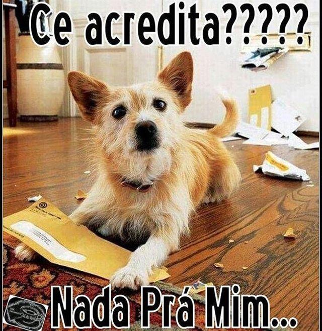 AQUI É DESSE JEITO!  #amocachorro  #cachorroetudodebom  #cachorro  #petmeupet  #sexta  #labrador  #golden  #pug  #luludapomerania  #schnauzer  #maltes  #viralata  #bulldog