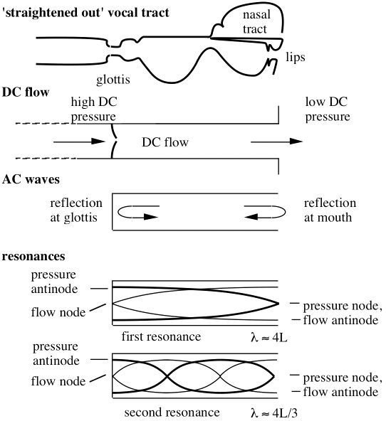 In a simple model, Fletcher (1993) uses the 'Bernoulli' nonlinearity in a simple but general analysis of resonator-valve interaction with different valve geometries. He derives equations and inequalities relating the natural frequencies of the valve, the resonance frequency of the filter (or resonator) and the fundamental frequency of the sound produced.
