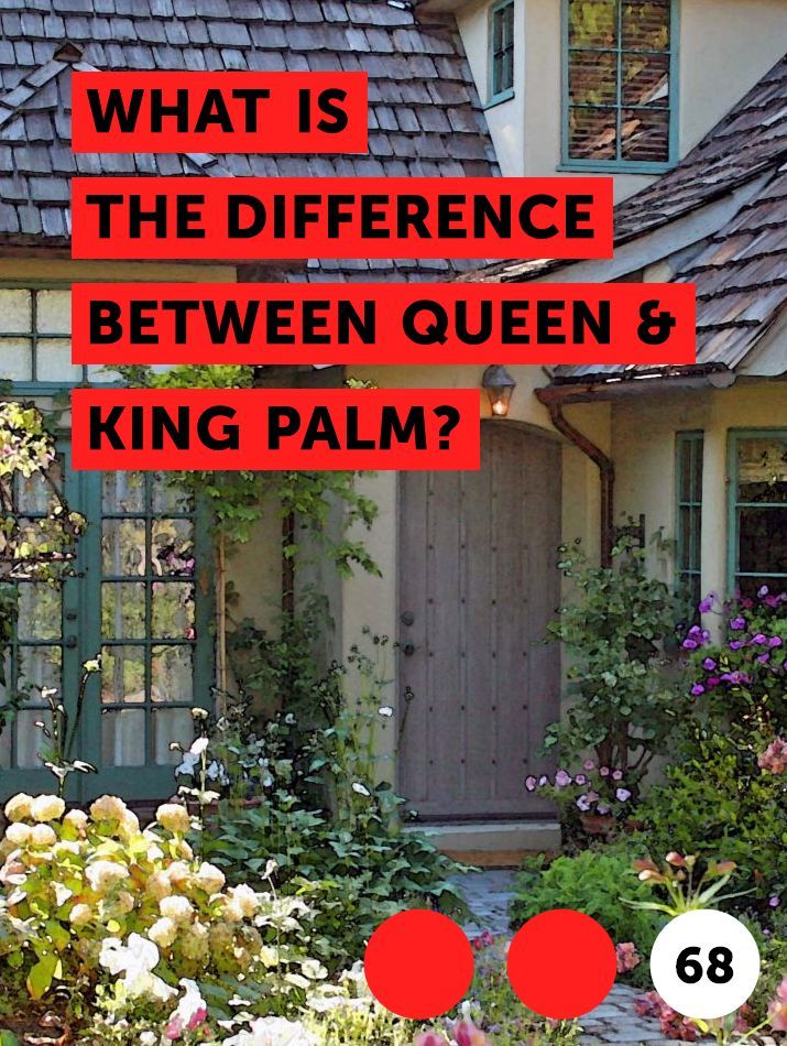 What Is The Difference Between Queen King Palm Plants Tree