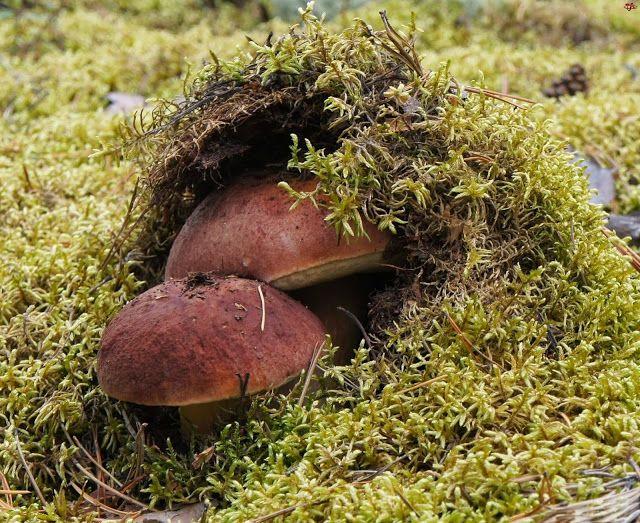 Fotopstryczek : Ubiegłoroczne grzybobranie