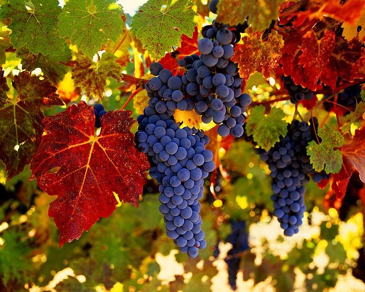 The Colors of Napa Valley    Napa Valley, California