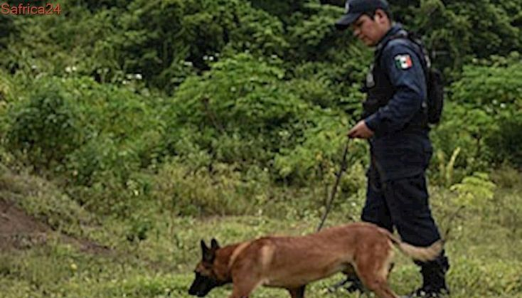 At least 30 bodies found in clandestine Mexico graves