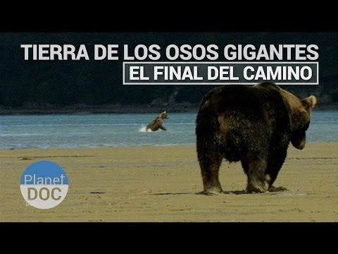 ▶ Tierra de Osos Gigantes. El final del camino | Naturaleza - Planet Doc - YouTube