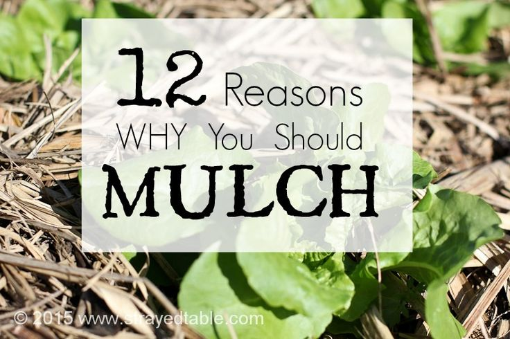 12 REASONS TO MULCH. The best gardening advice you can simple do is start mulching. Save time on watering and weeding and give your plants a little extra love.  #mulch #gardening #organic
