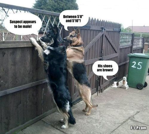Funny Police Dogs Surveillance Joke Picture | Funny Joke Pictures. This is me as a dog!!