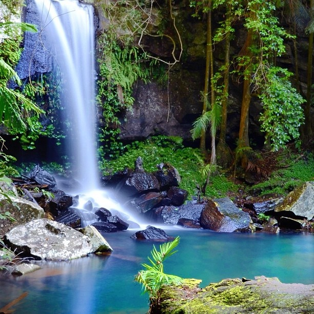 Another shot from Curtis Falls. Mount Tamborine, Gold Coast Australia. - @laurenepbath_ih- #webstagram