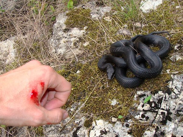 17 Best Ideas About Poisonous Snakes On Pinterest Pit Viper Pics Of Snakes And Types Of Poisoning