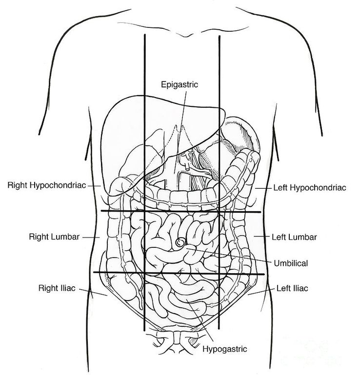 189 Best A P 1 Overview Images On Pinterest Anatomy