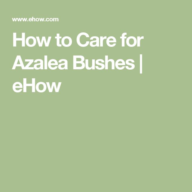 How To Care For Azalea Bushes Azalea Bush Front Yards