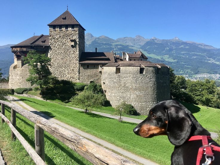 Your ultimate guide to travelling in Europe, the most dog-friendly part of the world, with a dog. Find out about rules for entry and travelling between countries, the best transport options, dining out, dog-friendly accommodation and what to see.