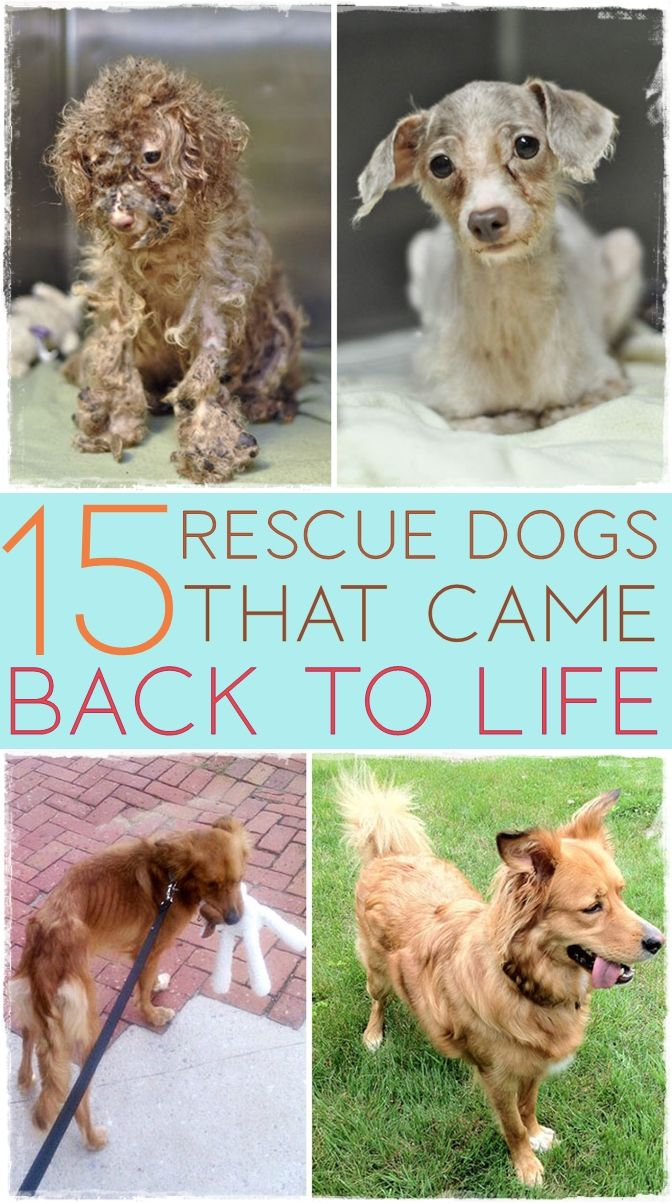 15 Rescue Dogs That Will Restore Your Faith In Humanity Rescue Dogs Dogs Animals