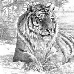 gedetailleerde tijger met alle kleinigheidjes getekend.