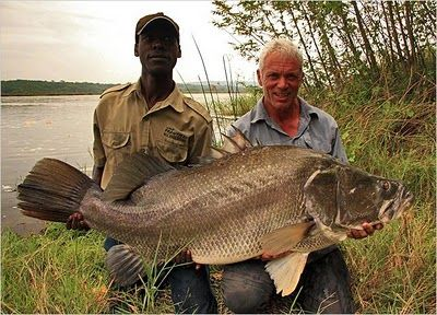 Nile Perch--one of the largest freshwater fish in the world Recommended by http://www.fishinglondon.co.uk/